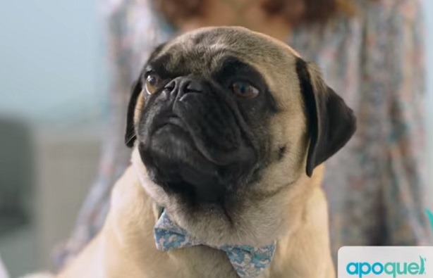 APOQUEL Talking Dog Commercial
