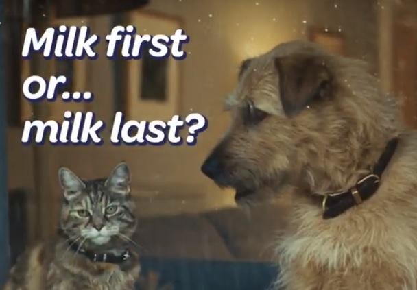 Tetley Dog & Cat TV Advert - Milk First or Milk Last?