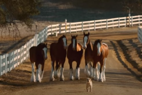 Budweiser Puppy and Horses Commercial