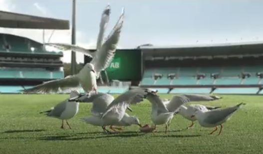 TAB Seagulls Eating Pie Commercial