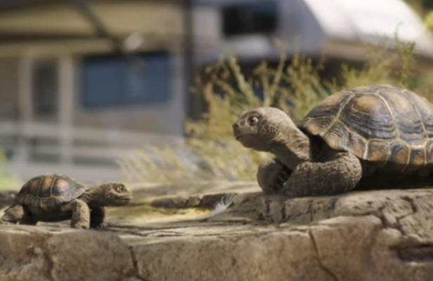 GEICO Motorhomes Turtles Commercial