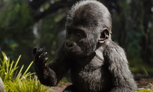 Disney Movies: The One And Only Ivan - Trailer Gorilla