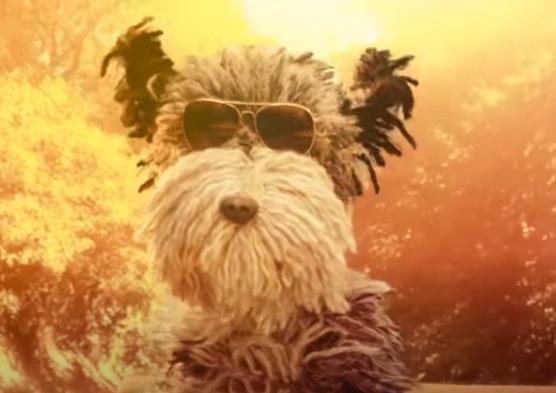 The AA Advert Dog