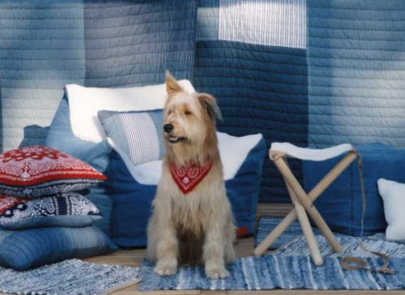 Target Levi's x Target Collection Commercial Dog