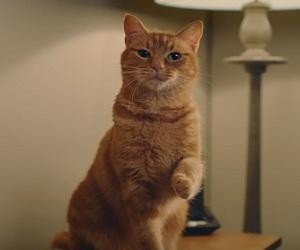 Flearoy Cat Video