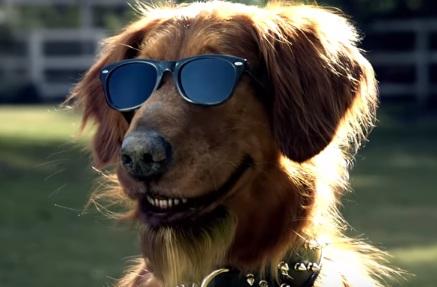 Bush S Grillin Beans Commercial Talking Dog